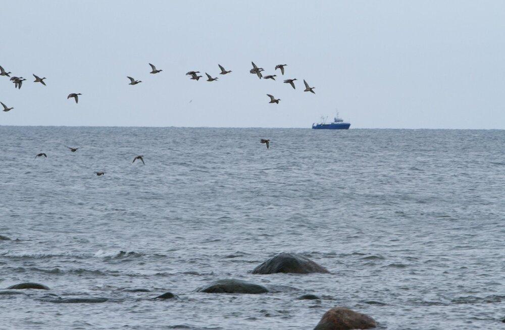 Kas keskkonnaprobleemid on Läänemere kala söömise ohtlikuks muutnud?