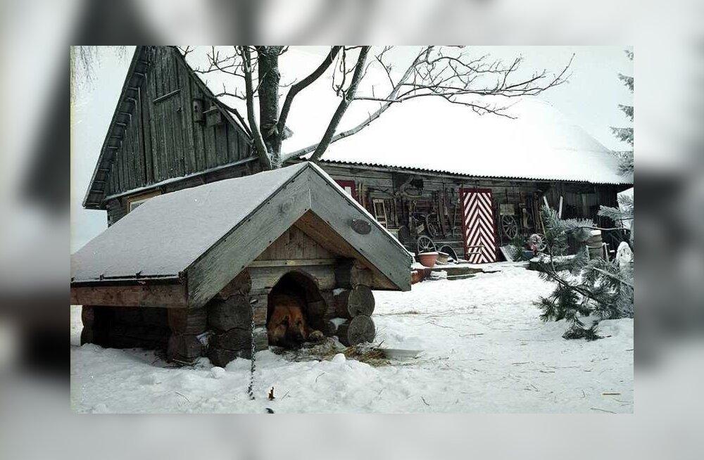 Viis soovitust koerakuudi talveks ettevalmistamiseks