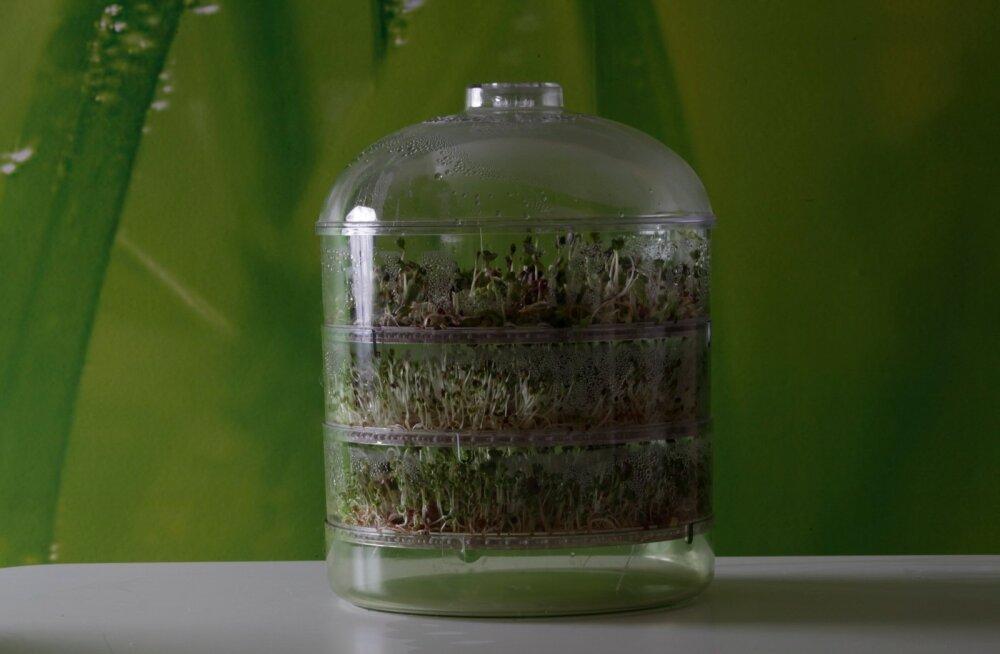 Kuidas kasvatada tervislikke idandeid