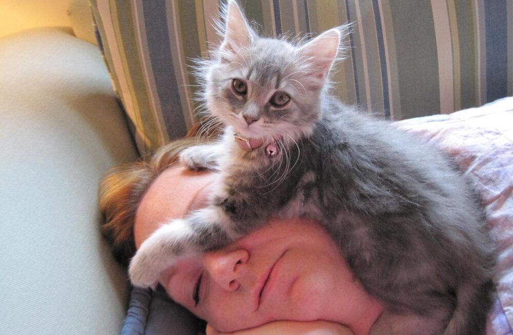 Miks kass armastab inimese pea piirkonnas magada?