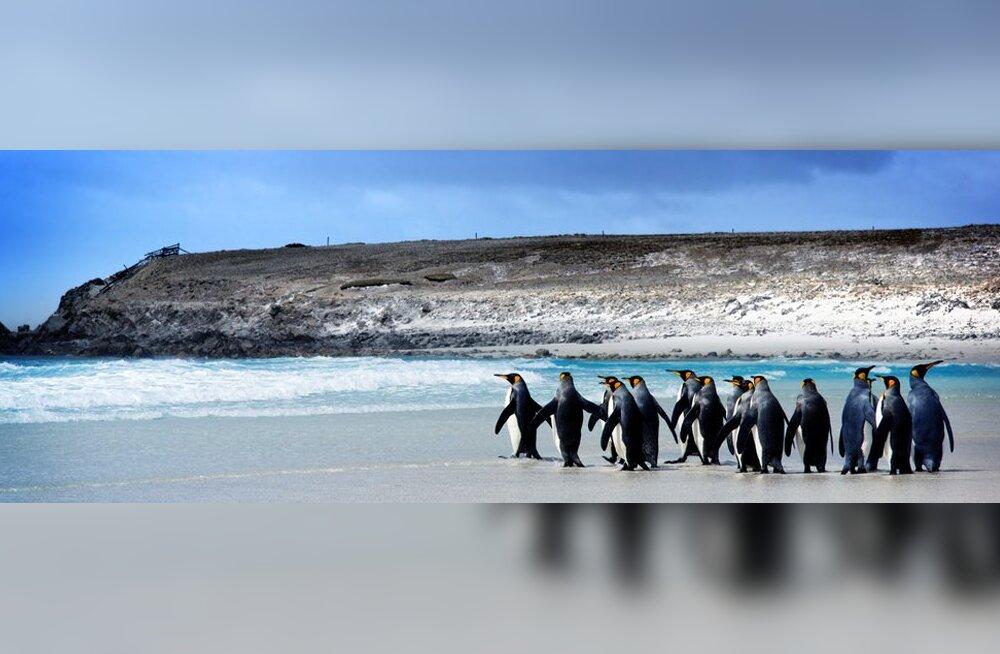 Фолклендские острова: царство природы и предмет территориального спора