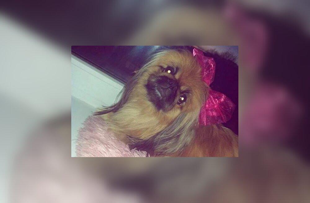 Peo käigus visati väike koer välja kortermaja viienda korruse aknast, mille tagajärjel loom suri
