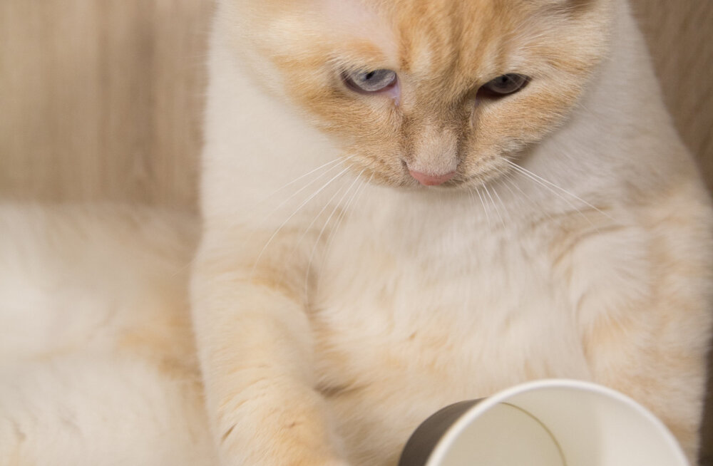 Miks kassid justkui meelega asju ümber ajavad?