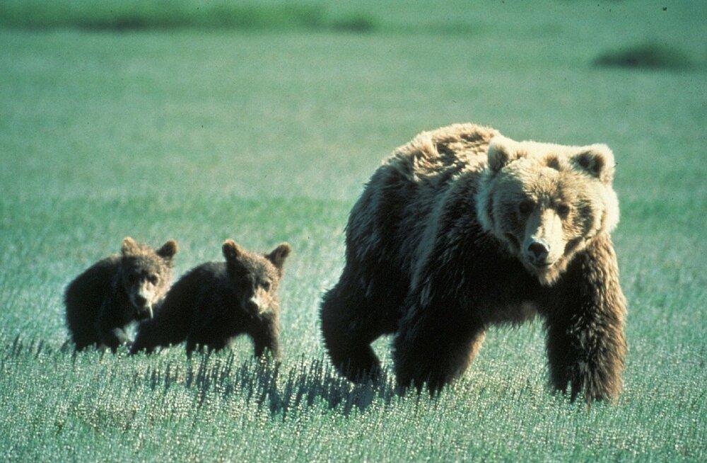 Saladusi loomariigist: 5 erakordset ema ja nende iseäralikud kombed