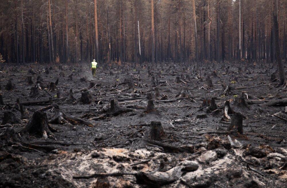 Vikipalu metsapõleng oli viimaste aastate suurim ja seda kustutas 800 inimest.