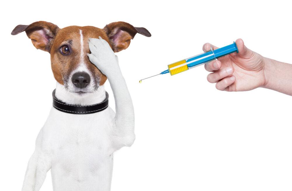 10 küsimust, mida iga loomaomanik oma loomaarstile esitama peaks
