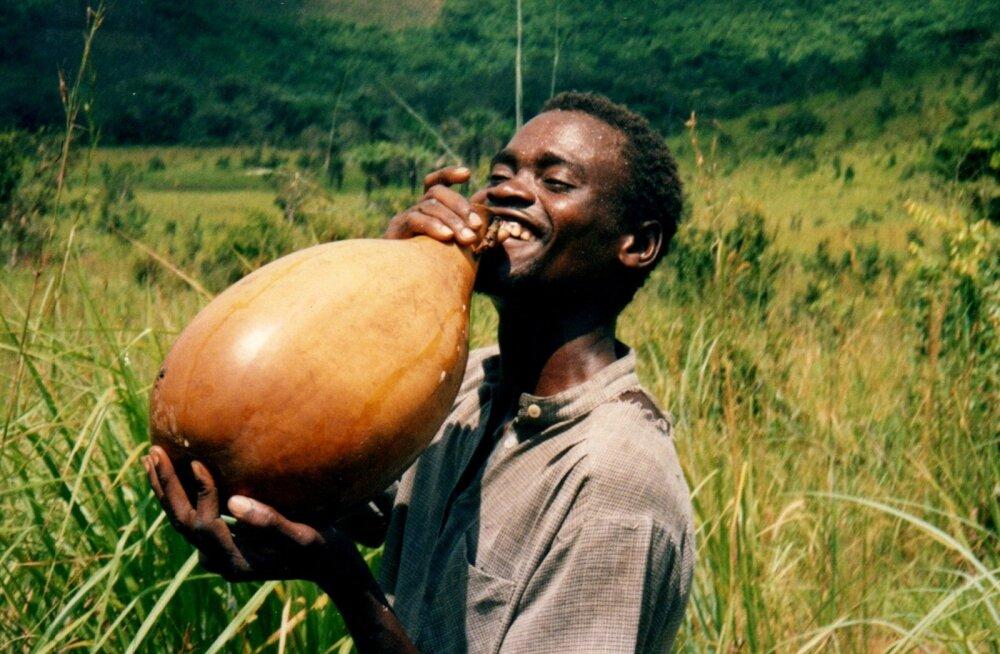 Hapukas ja lahja palmivein on eriti levinud ekvatoriaal-Aafrikas.