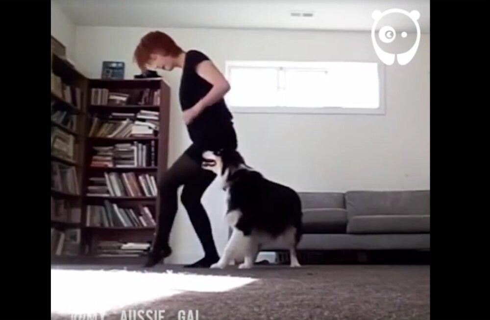 VIDEO: Tantsulõvi! Koer tantsib Iiri tantsu paremini kui nii mõnigi meist