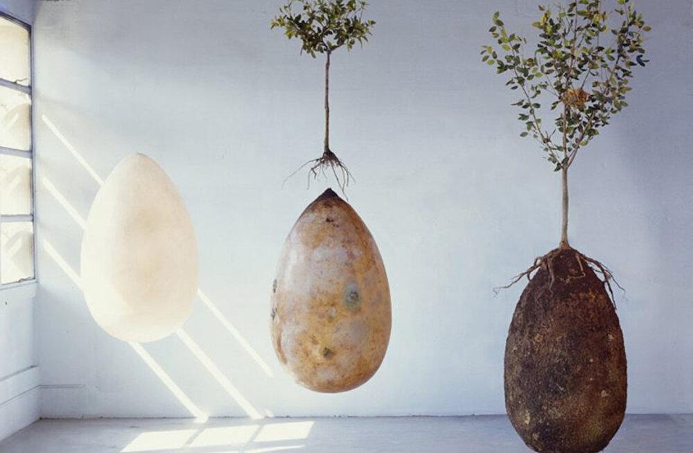 VIDEO | Eriti maalähedane ja loodussõbralik matmisviis - inimese surnukehast sünnib puu