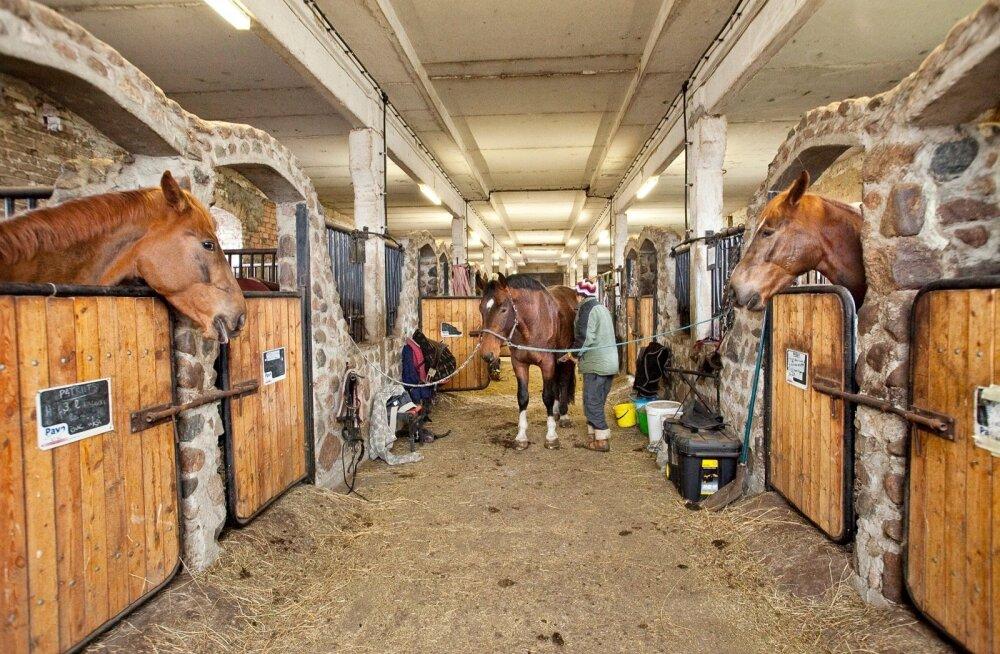 Maaeluminister uurib olukorda Tori hobusekasvanduses