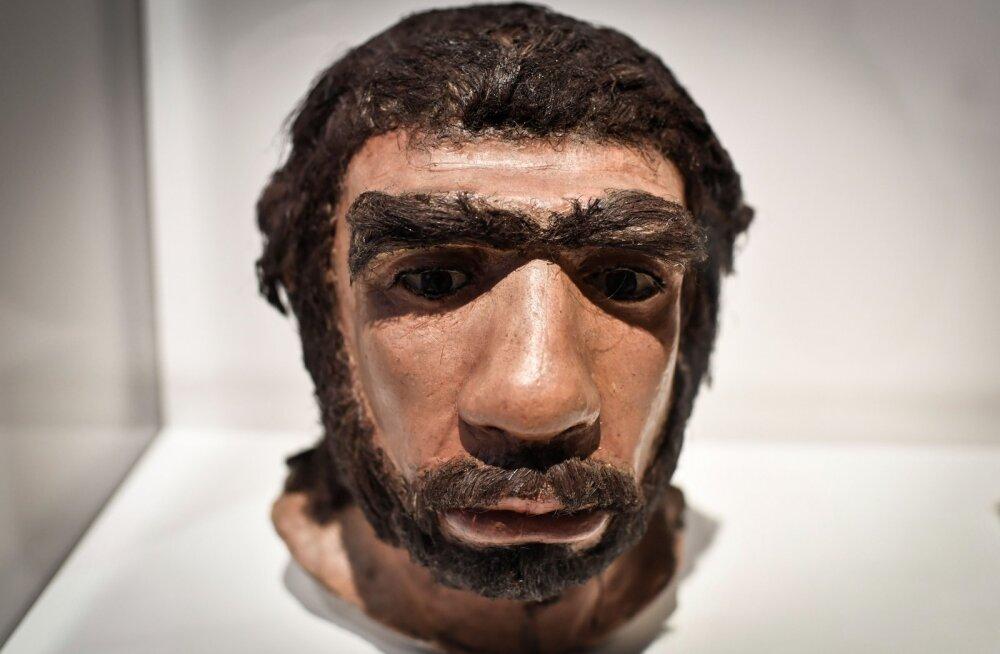 Neandertallased polnud kohmakad metslased! Uus uuring annab mõista, et neil olid vägagi osavad käed