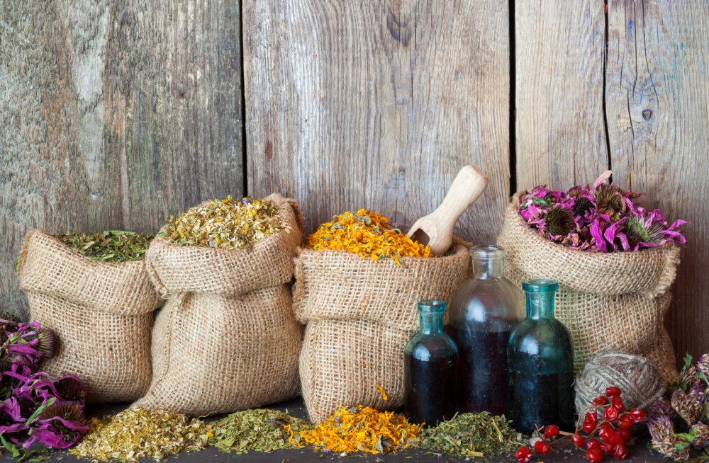 10 ravim- ja maitsetaime sügistalviste viirushaiguste ja köha leevendamiseks