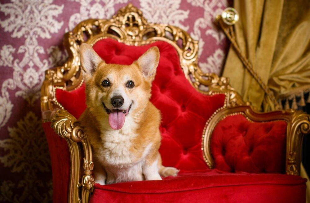Pilguheit minevikku: milline oli kuninganna Elizabeth II corgide luksuslik elu?