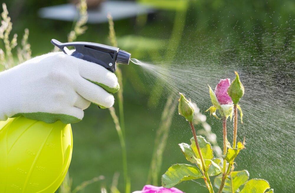 Soodalahus aitab nii lehetäide kui ka seenhaiguste vastu.