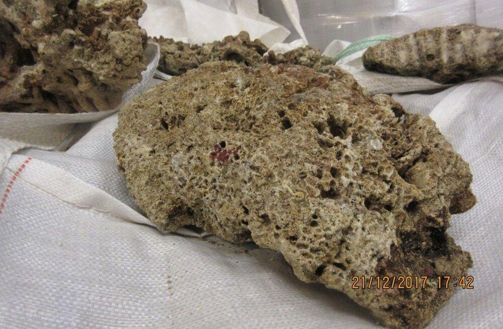 Riias konfiskeeritud korallid