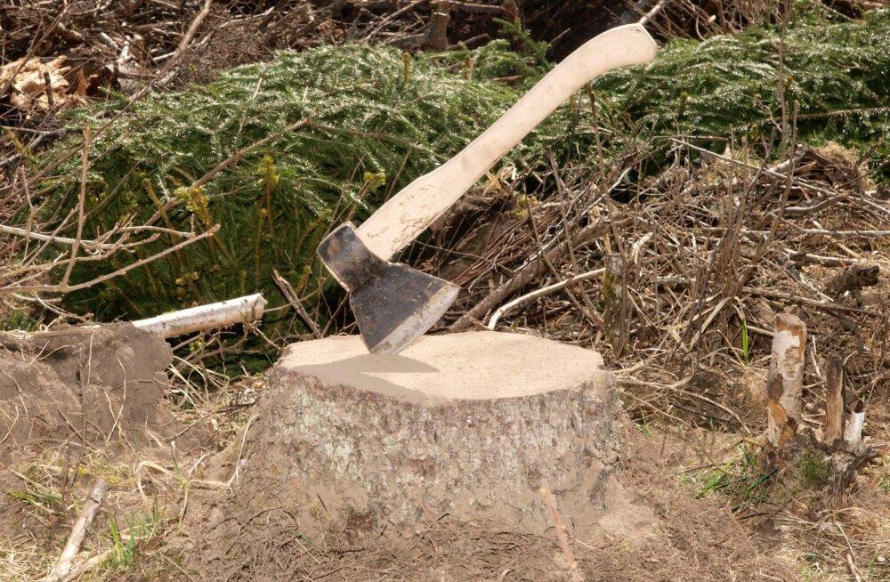 EMA soovib Kure kinnistu lageraietest innustatult metsaseadust karmistada