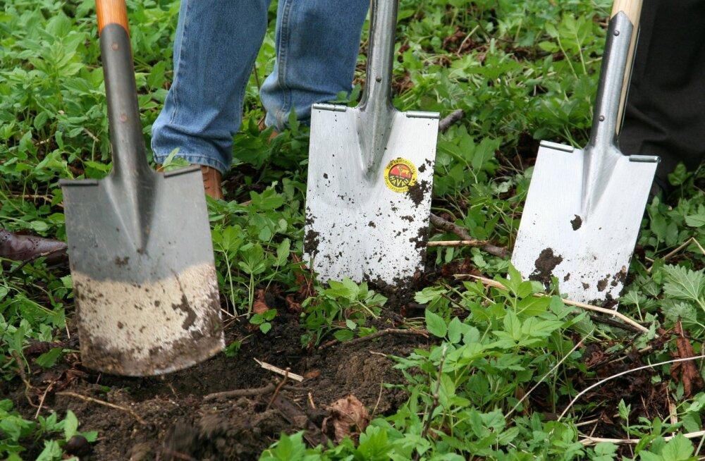 Vaata, millised aiatööd tuleb mais ära teha