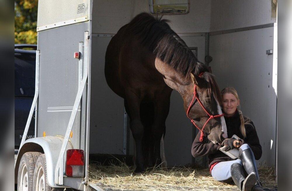 Eesti hobuse jõulud: dieet ja trenn