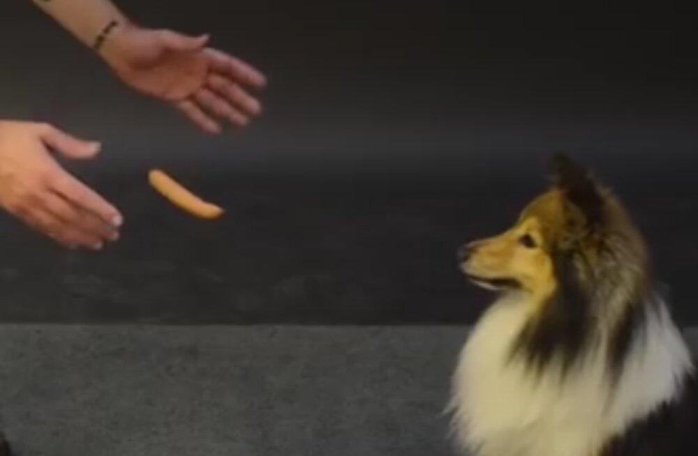 Natukene mustkunsti: vaata, kuidas koerad hõljuvale viinerile reageerivad