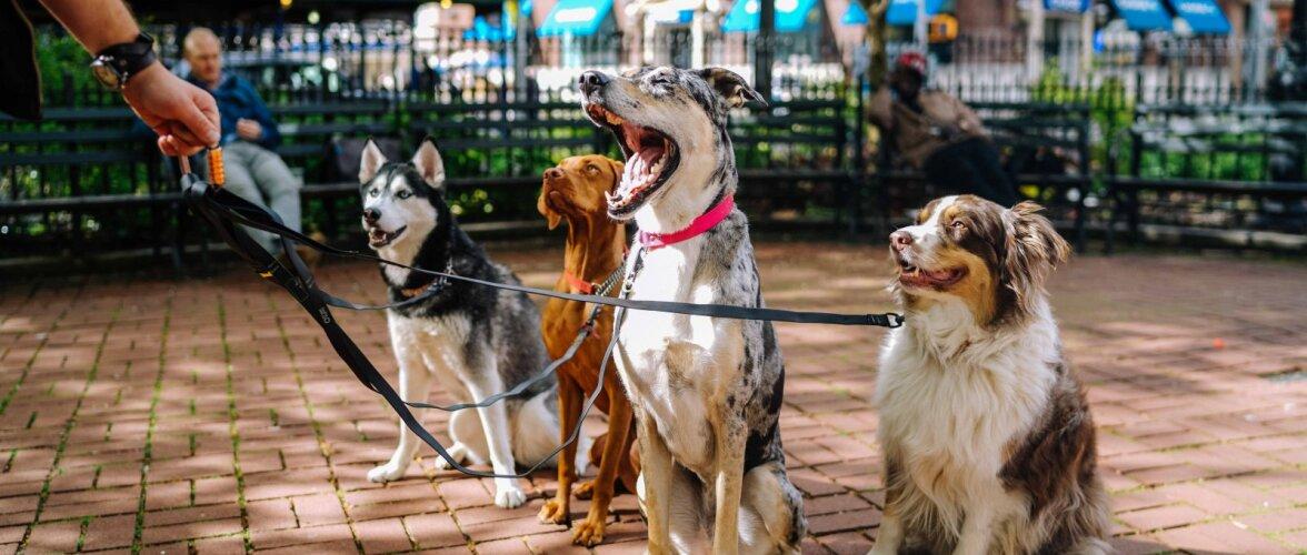 7 sekundi reegel: kontrolli järele, ega koeral pole jalutuskäiguks liiga palav