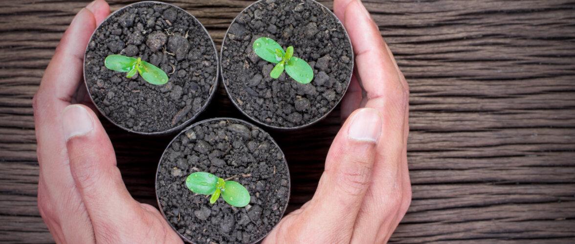 Valik köögivilju, mis võiksid saada märtsis mulda