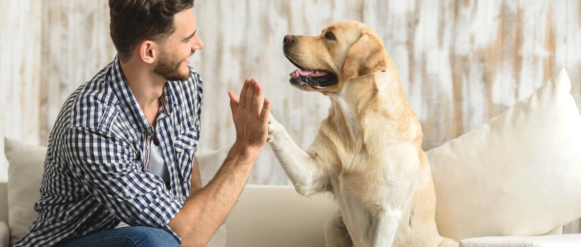 Vajad reisi ajaks kodule ja lemmikloomale hoidjat? Vaata, kuidas internetist sobiv majasokk leida