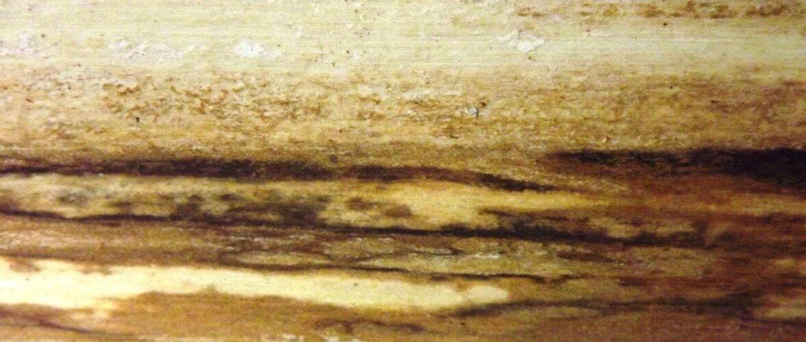 Kasekoore all moodustuvad fantaasiat ergutavad pildid.
