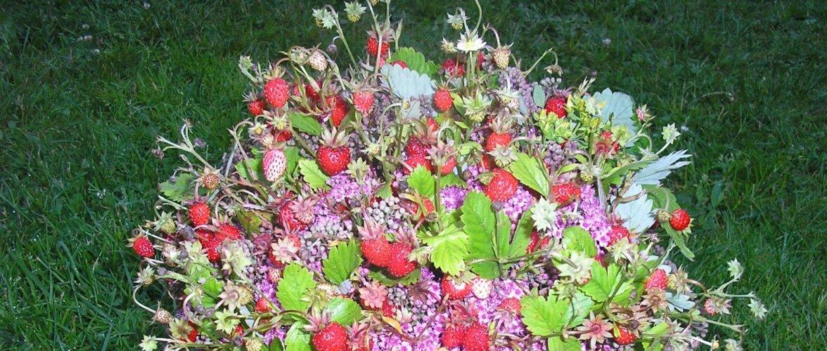 Metsmaasikatest kimbuke.