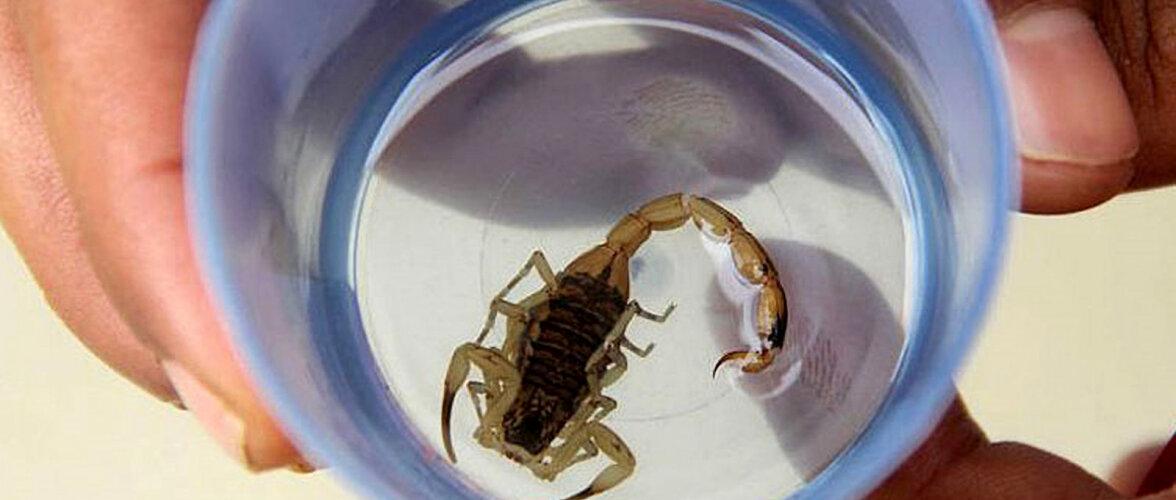 В Германии на винограднике нашли скорпионов