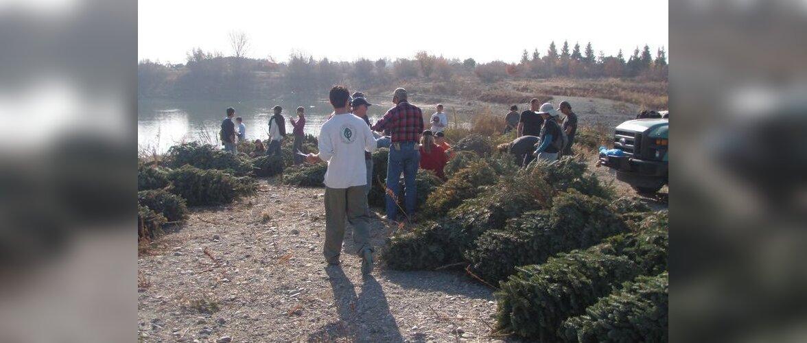 В США рождественские елки выбрасывают в озера. Зачем?!