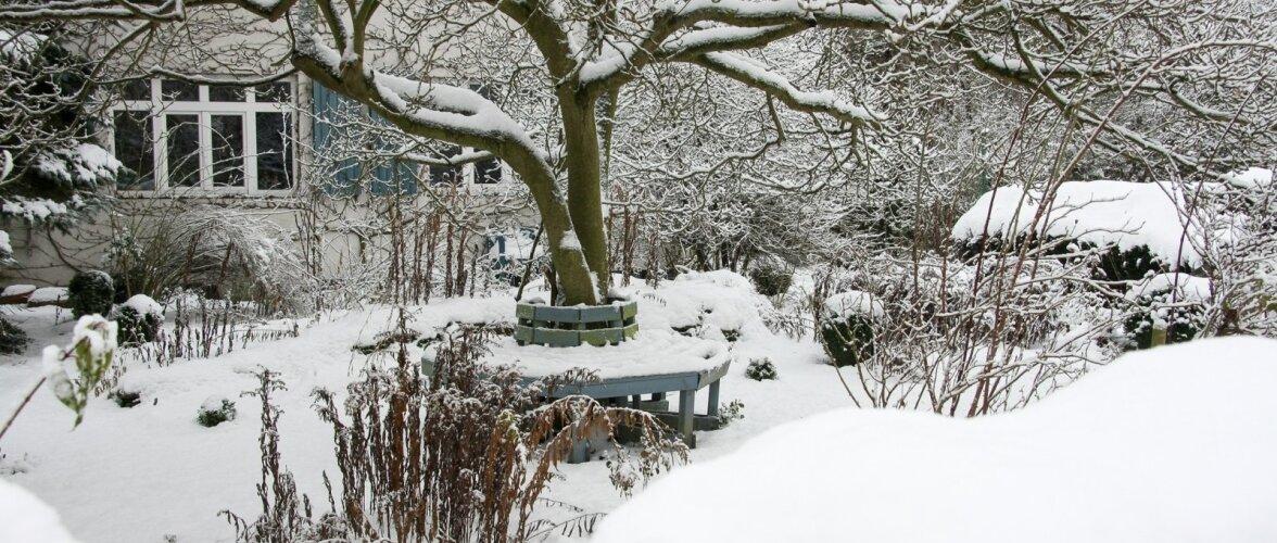Talvist aeda tasub vaadelda, et teaks, mida kevadel teha tuleks.