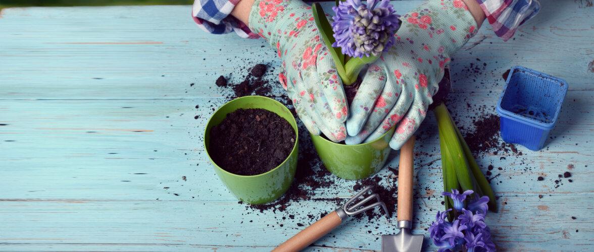 Tõeline aiahoolik! Allahindlused ei ole sinu jaoks