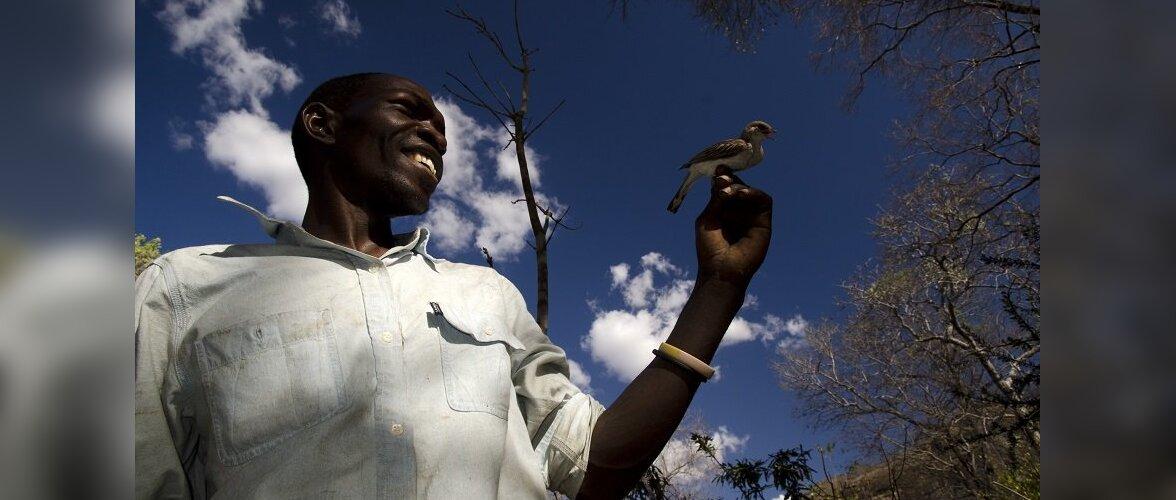 В Мозамбике люди научились говорить на птичьем языке