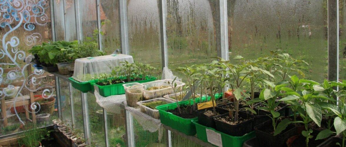 Väikesed taimed harjuvad oma uue kasvukohaga.