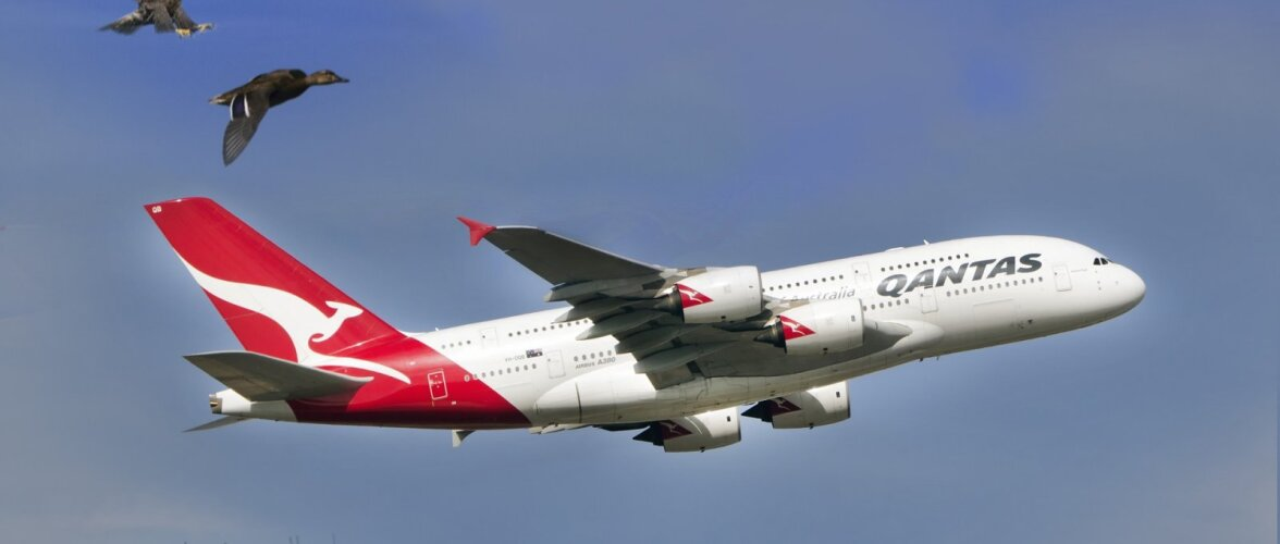 KOJU TAGASI | Kas tead, millised veidrad põhjused on sundinud piloote lennukit ringi pöörama?