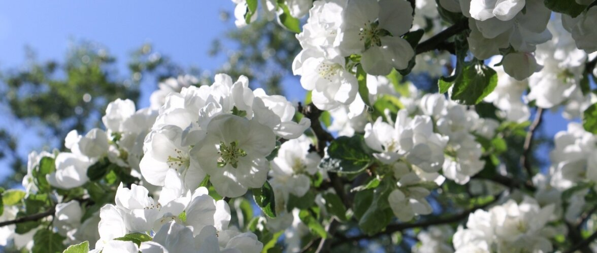 Kevad