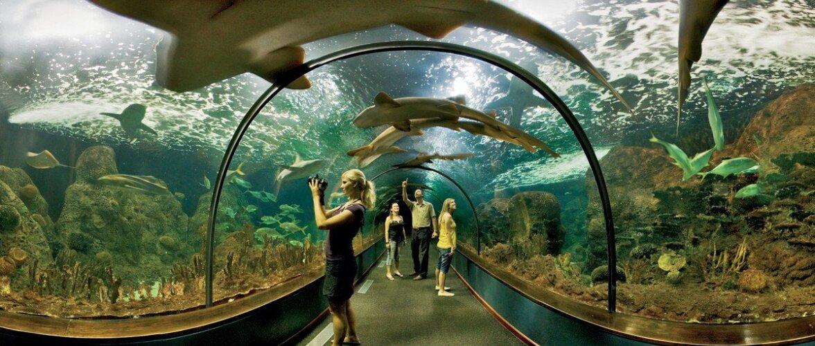 10 самых интересных мест на острове Тенерифе