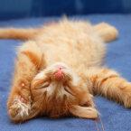 Kaheksa kindlat märki, et kassile meeldib sinuga koos elada