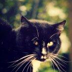 Soovid kassiga sõprust sõlmida? Mõned nipid, mis kindlasti aitavad vurrulise südant võita