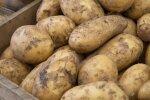 Enamik saagist on koristatud, kuid kartul tuleb maast aeglasemalt kui mullu
