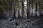 Metsatulekahju Valgamaal