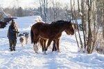 """Hobuste hooldaja Kersti Känd tunnistab, et hobused käivad talle üle jõu, kuid ütleb, et tema üksi ei ole olukorras süüdi.  """"Kõik ei ole päris mustvalge,"""" sõnab ta. Ometi on ta lubanud suveks hobustekarja vähendada."""