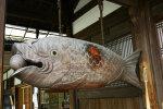 Kas kalad magavad?
