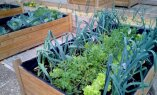 8 nippi, mis aitavad luua ideaalse terrassiaia