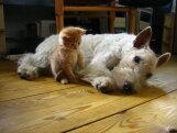 Ülisüdamlik FOTOGALERII: 21 looma, kes näitavad, kui tugevalt nad oma parimaid sõpru armastavad