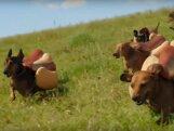 VIDEO: Viinerikoerte rünnak! Lustakas ketšupireklaam vallutab loomasõprade südameid