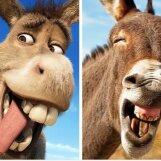 Kas mäletad? Need 10 looma on täpsed koopiad meie lemmikutest animafilmide stseenidest