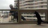 Humoorikas VIDEO: Vaata, kuidas kõrghoones elav kass oma mänguhimu rahuldab