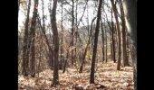 ŠOKEERIV VIDEO: Mees filmis loodust ja nägi kummitust