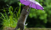 GALERII: Fotograaf andis oravale väikese vihmavarju